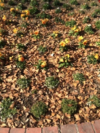 公園で。落ち葉の中に黄色い花が